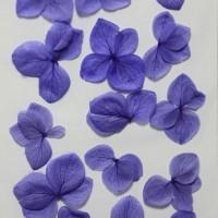 網繡球花-524色-押花花材