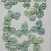 網繡球花-526色-押花花材