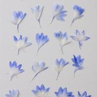 矢車菊-粉藍