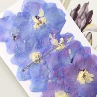 大飛燕-紫色 - 押花花材