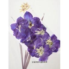 大飛燕-紫藍色 - 押花花材