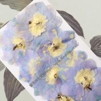 大飛燕-粉紫色 - 押花花材