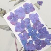 繡球花-紫紅色-押花花材