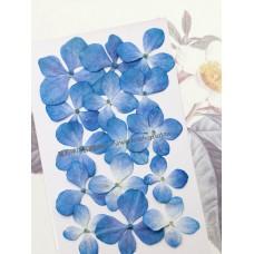 繡球花-藍白色-押花花材