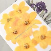 天鵝絨-橘色- 押花花材