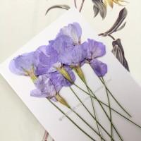 麥蘭花-粉紫色- 押花花材