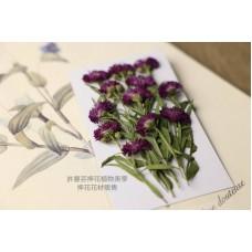孔雀草花-側面酒紅色-押花花材