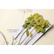 黃河花帶枝-黃色- 押花花材