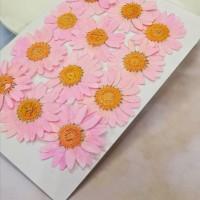 白晶菊-亮粉紅色