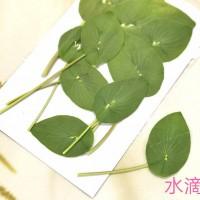 金翠花葉片-綠色-押花花材