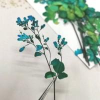 唐松芽-藍色- 押花花材