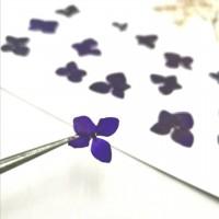 繡球花-永生繡球-深紫-押花花材