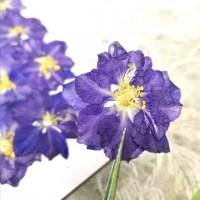 千鳥-古董藍色 - 押花花材