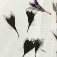 矢車菊-深紫白-押花花材