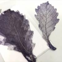 網葉-橡樹葉-黑色-押花材料