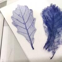 網葉-橡樹葉-寶藍色-押花材料