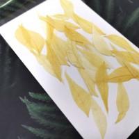 美白系葉-花秋葉-復古白色-押花材料