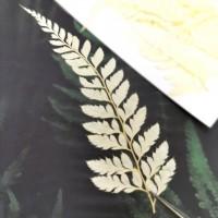 美白系葉-蕨類-米白色-押花材料