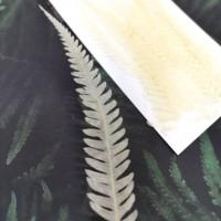 美白系葉-蕨類-白色-押花材料