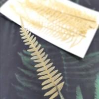 美白系葉-蕨類-鵝黃色-押花材料