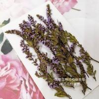雪梅-亮紫色-押花花材