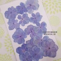 繡球花-押花花材-複瓣紫藍色