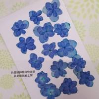 繡球花-押花花材-複瓣寶藍色