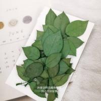 玫瑰葉-綠色-押花花材