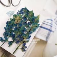 魯冰花-染藍色-押花花材