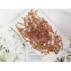 小巒樹芽花-原色-押花花材