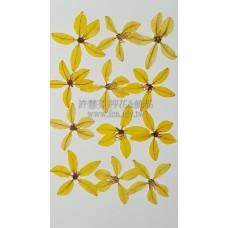 金翠花-黃色