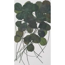 三葉草-綠色