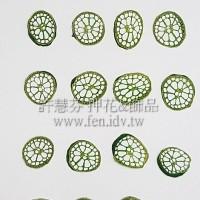 圓梗-染綠