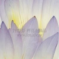 荷花瓣-淺紫色-押花花材