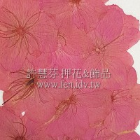 櫻花-紅色