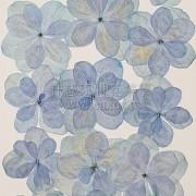繡球花_複瓣淺藍色