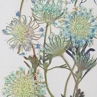 翠珠枝-藍色