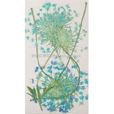 翠珠枝-天藍色