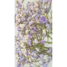 滿天星-紫色帶枝-押花花材