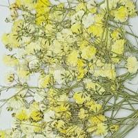 滿天星-黃色帶枝-押花花材