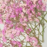 滿天星-淡粉紅色帶枝-押花花材
