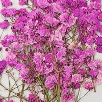 滿天星-粉紅色帶枝-押花花材