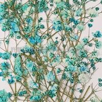 滿天星-天藍色帶枝-押花花材