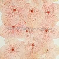 繡球花_淡粉紅色