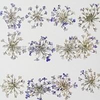 蕾絲花-紫色
