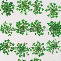 蕾絲花-綠色
