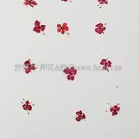 翠珠花-紅色