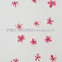 翠珠花-粉紅色