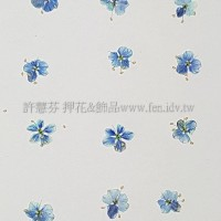 翠珠花-淡寶藍色