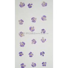 翠珠花-紫色